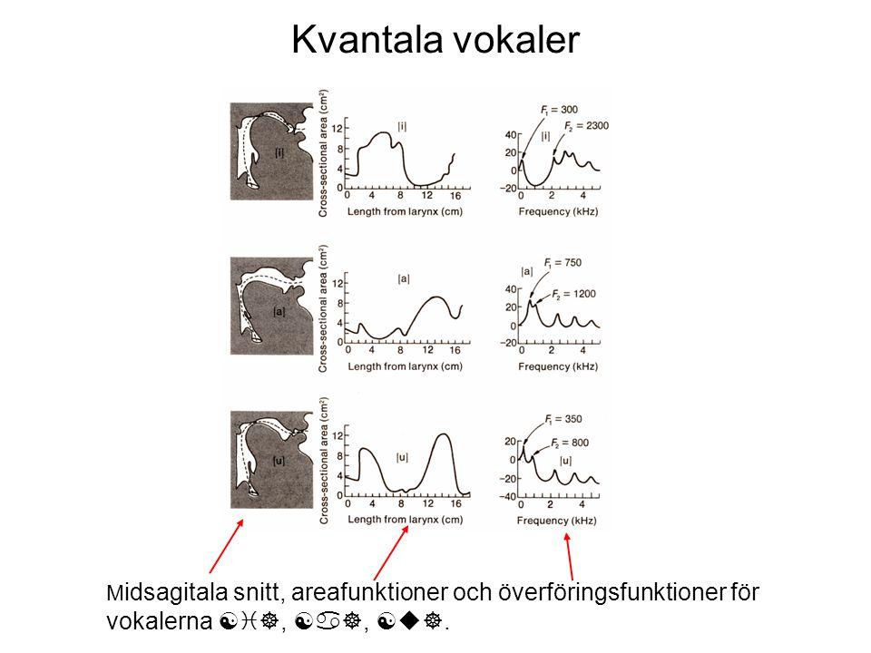 Kvantala vokaler Midsagitala snitt, areafunktioner och överföringsfunktioner för vokalerna [i], [a], [u].